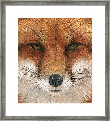 Red Fox Gaze Framed Print
