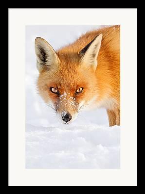 Wildlife Celebration Photographs Framed Prints