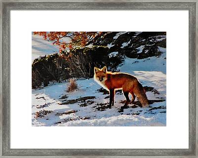 Framed Print featuring the photograph Red Fox In Winter by Diane Alexander