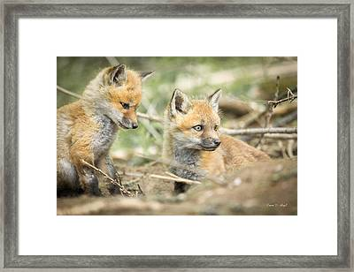 Red Fox Kits Framed Print by Everet Regal