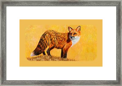 Red Fox Painting Iphone Case Framed Print by Crista Forest