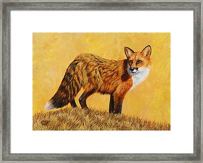 Red Fox Painting - Looking Back Framed Print by Crista Forest