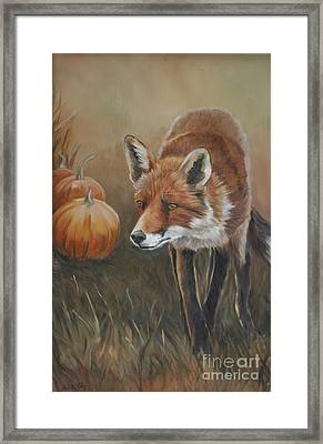 Red Fox With Pumpkins Framed Print by Charlotte Yealey