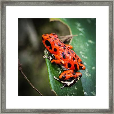 Red Frog Beach Framed Print