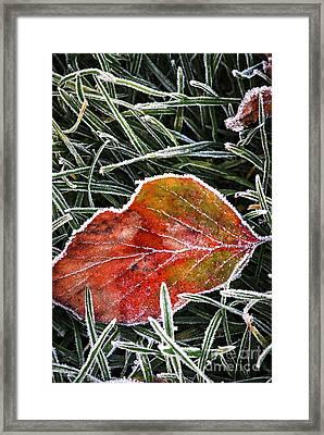 Red Frosty Leaf On Frozen Ground Framed Print by Elena Elisseeva