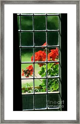 Red Geranium Through Leaded Window Framed Print
