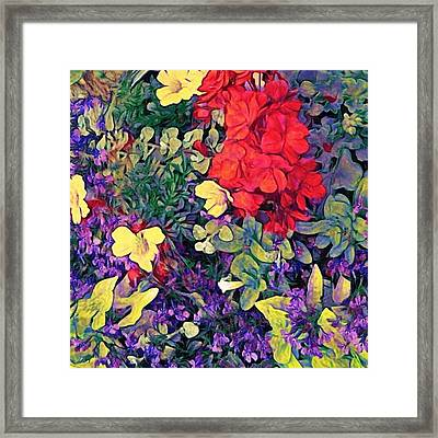 Red Geranium With Yellow And Purple Flowers - Square Framed Print