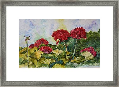 Red Geraniums Framed Print by Patsy Sharpe