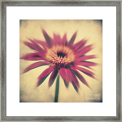 Red Gerbera Framed Print by Angela Doelling AD DESIGN Photo and PhotoArt