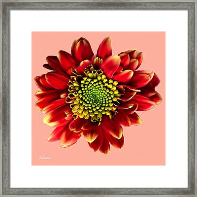 Red Gerbera Daisy Painting Framed Print by Bob and Nadine Johnston