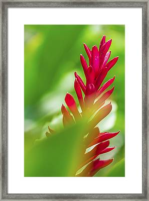 Framed Print featuring the photograph Red Ginger Bract by Leigh Anne Meeks