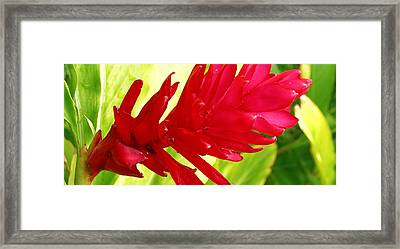 Red Ginger Flower Framed Print by James Temple