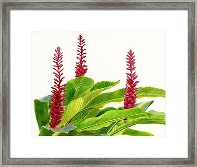 Red Ginger Flowers Framed Print