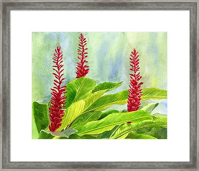 Red Ginger Flowers With Background Framed Print