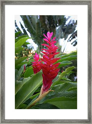 Red Ginger, Puerto Vallarta, Jalisco Framed Print