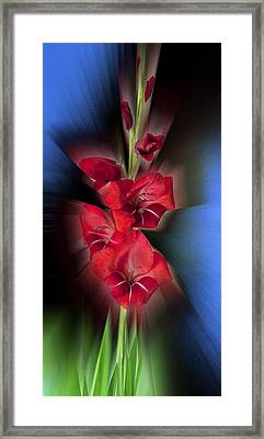 Framed Print featuring the photograph Red Gladiola by Mark Greenberg