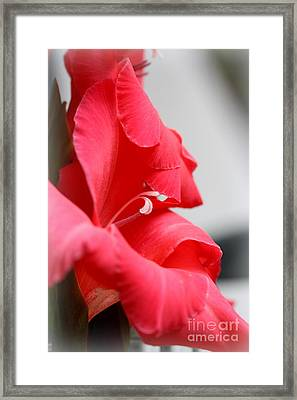 Lady In Red Framed Print by Patti Whitten