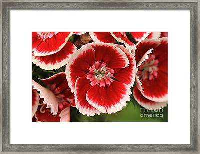 Red Glory All Profits Go To Hospice Of The Calumet Area Framed Print