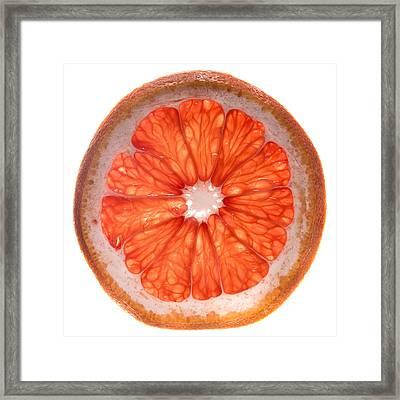 Red Grapefruit Framed Print