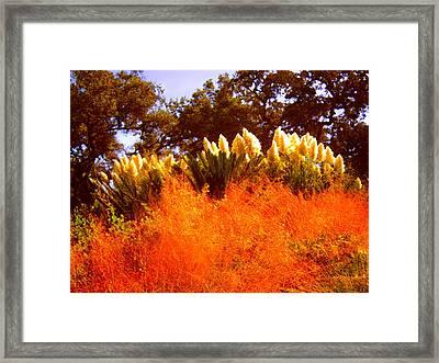 Red Grass Framed Print by Amy Vangsgard