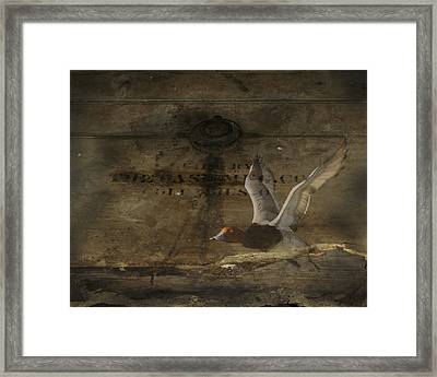 Red Head Duck Old Box Framed Print by Randall Branham