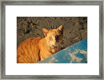 Red-head Framed Print