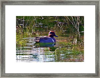 Red Headed Duck Framed Print by Susan Garren