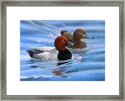 Red Headed Ducks Framed Print by Dan Terry