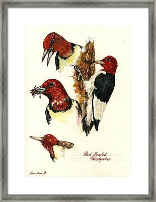 Red Headed Woodpecker Bird Framed Print by Juan  Bosco