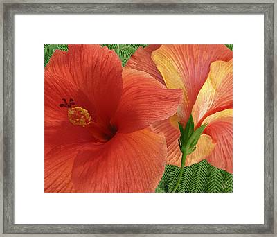 Red Hibiscus Framed Print by Ben and Raisa Gertsberg