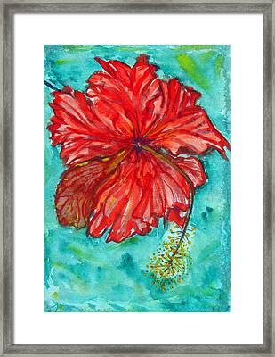 Red Hibiscus Flower Framed Print by Kelly     ZumBerge