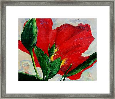 Red Hibiscus Framed Print by Jean Cormier