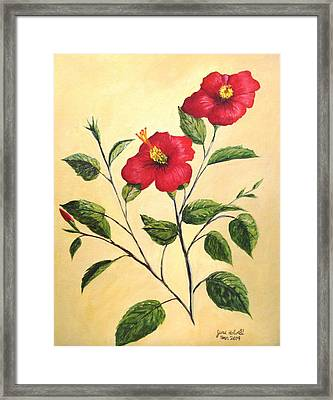 Framed Print featuring the painting Red Hibiscus by June Holwell