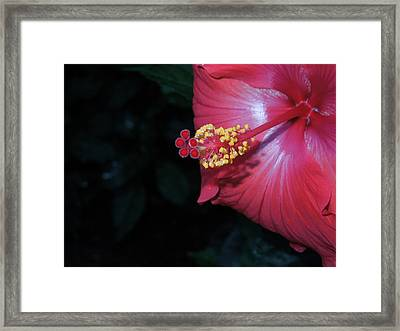 Framed Print featuring the photograph Red Hibiscus by Ron Davidson