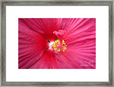 Red Hibiscus Series 1 Framed Print