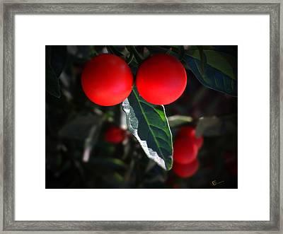 Red Hot Chili Pepper Framed Print
