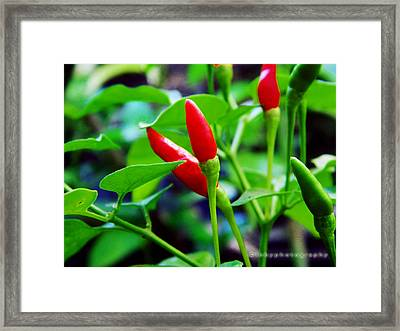 Red Hot.. Chillis Framed Print by Ibrahim Mat Nor