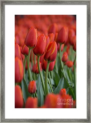 Red Hot Jazz Trio Framed Print by Brian Boyle
