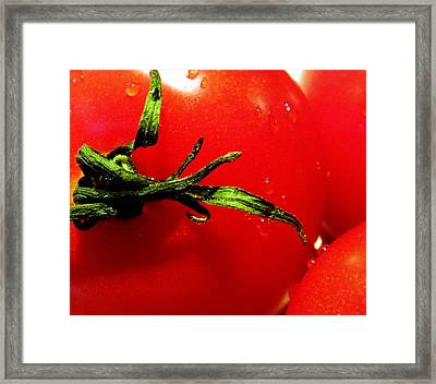 Red Hot Tomato Framed Print by Karen Wiles