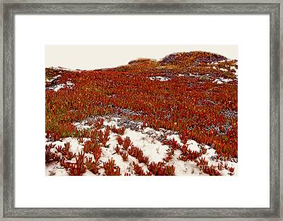 Red Ice On Beach 1 Framed Print by Linda  Parker