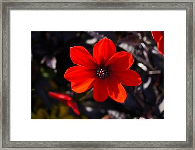 Red II Framed Print by Ronda Broatch