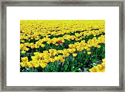 Red In A Yellow World Framed Print by Benjamin Yeager