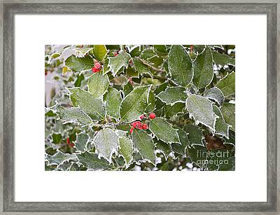 Framed Print featuring the photograph Red In Winter by Felicia Tica
