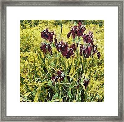 Red Irises Framed Print