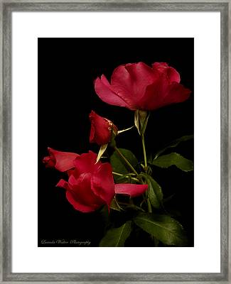 Framed Print featuring the photograph Red Is For Passion by Lucinda Walter