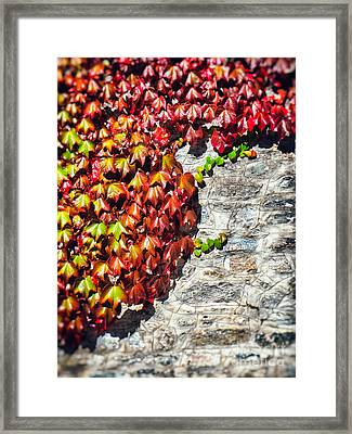 Framed Print featuring the photograph Red Ivy On Wall by Silvia Ganora