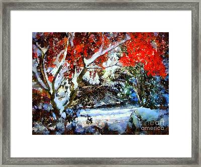 Red Japanese Maple In Snow Framed Print by Janine Riley
