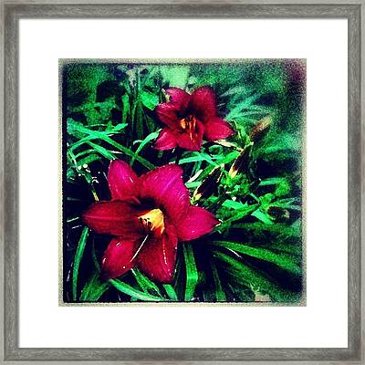 Red Jewels In The Garden Framed Print by Paul Cutright