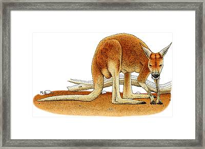 Red Kangaroo Framed Print