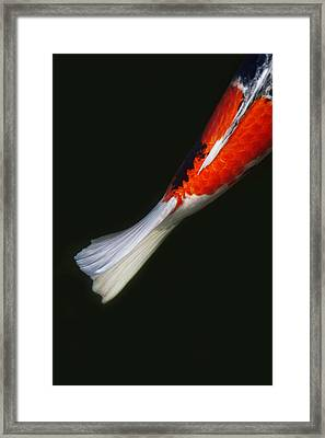 Red Koi Tail Down Vertical Framed Print